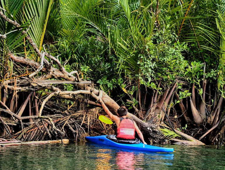 A Kayakasia guide inspects the mangrove undergrowth