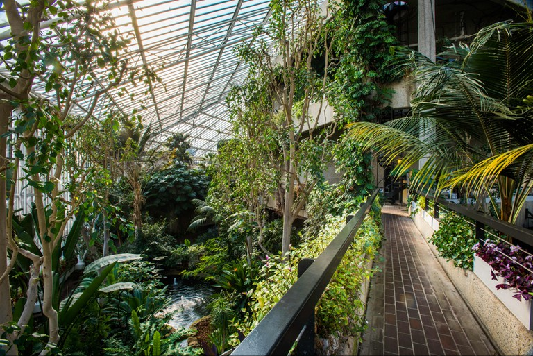 The urban jungle that is the Barbican Conservatory