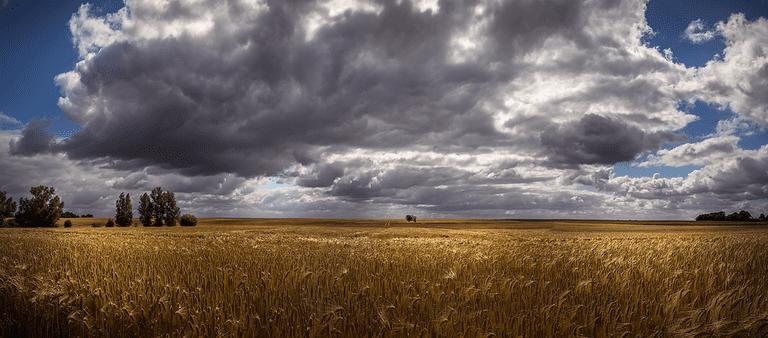 cornfield-2770319_960_720.jpg