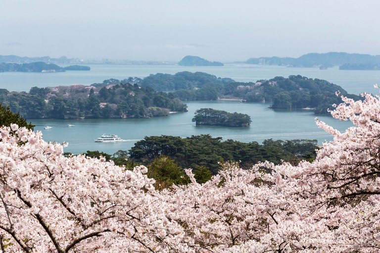 Cherrry blossoms and Matsushima Bay in Miyagi, Japan.
