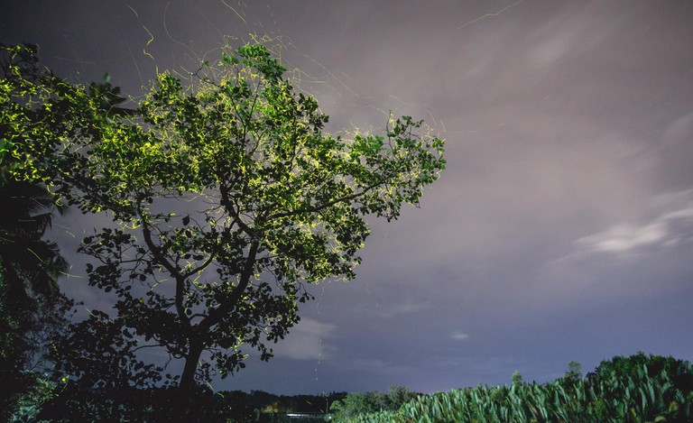 fireflies bohol