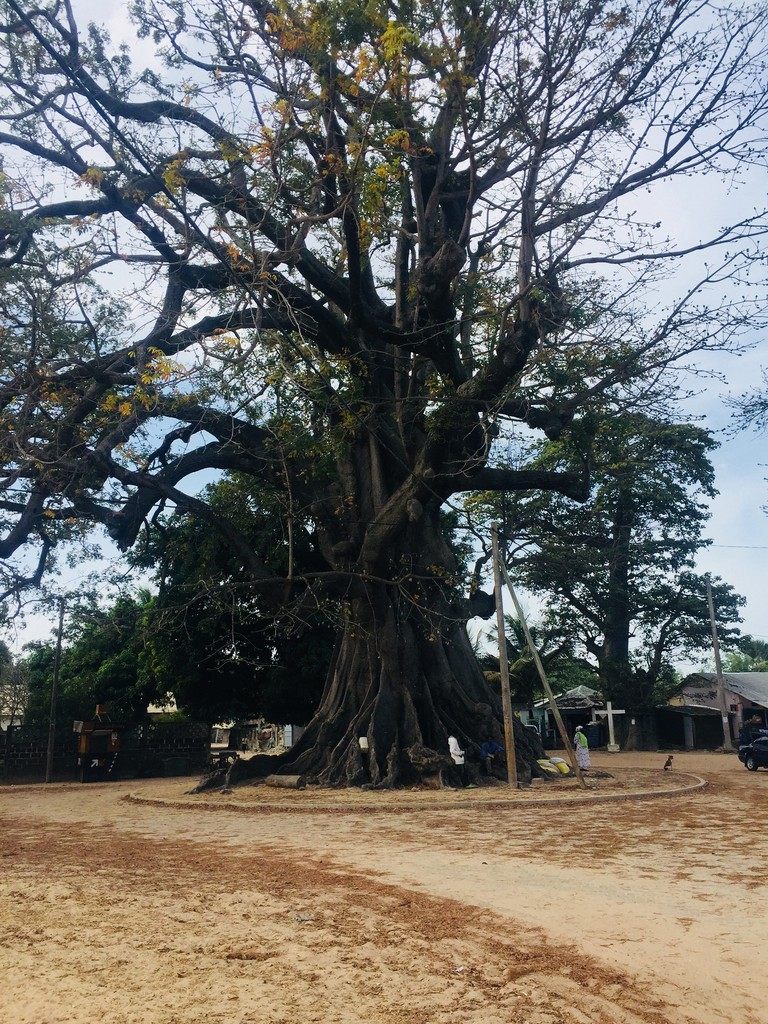 A giant kapok tree in the centre of Diembéring, Oussouye