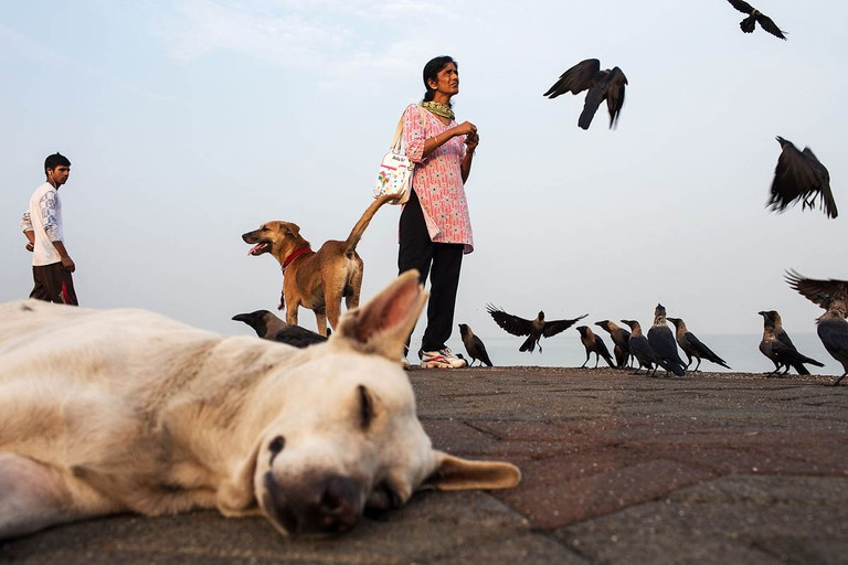 india_mumbai_nariman_point_marine_drive_morning_bombay_dog_crows_birds