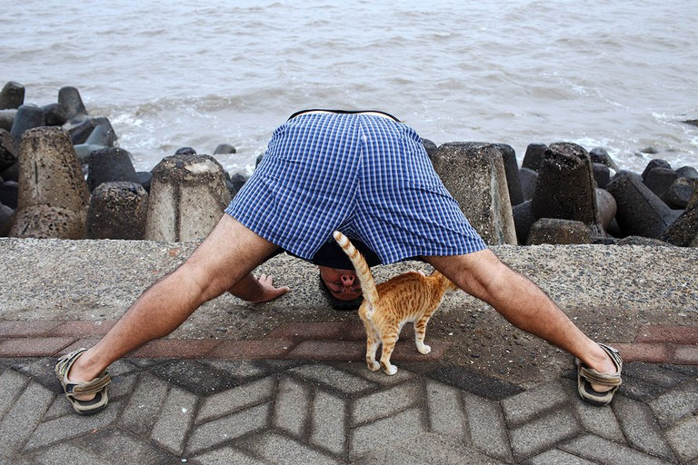 india_mumbai_nariman_point_marine_drive_morning_exercising_exercise_bombay_fit_fitness_yoga_cat