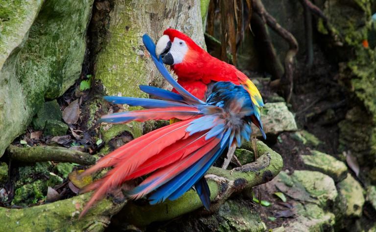 Macaw_Fotor