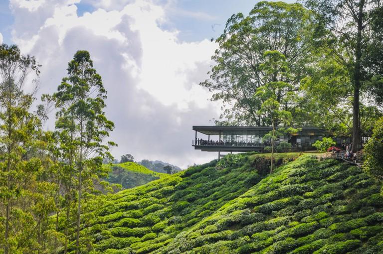 Sungai Palas BOH Tea House, Cameron Highlands, Malaysia