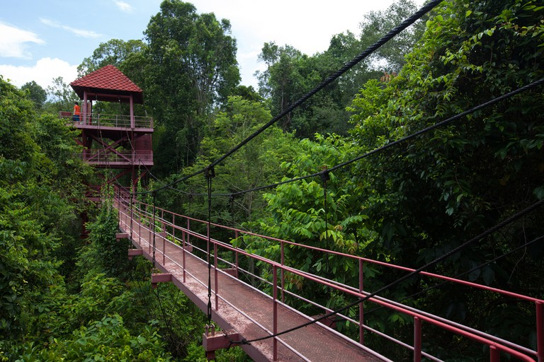 Canopy walk in Danum Valley