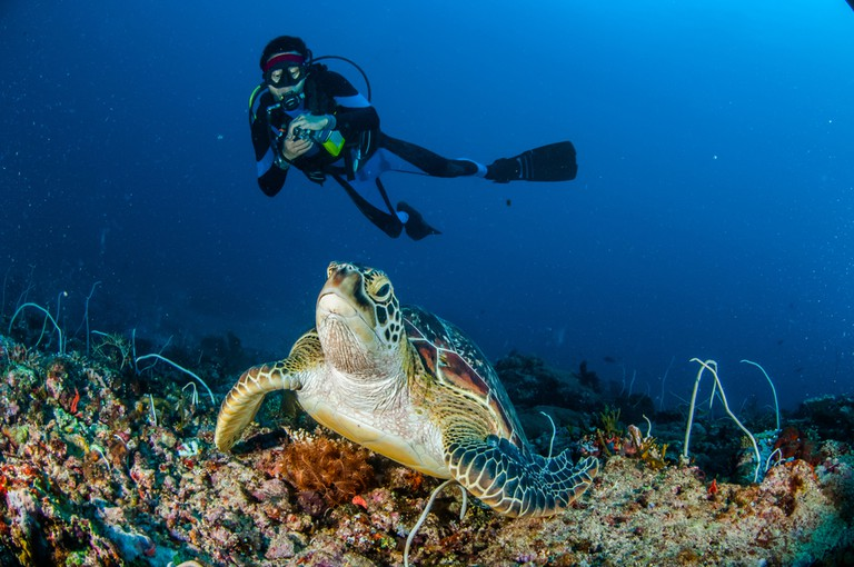 Diver and green Turtle in Gili, Indonesia