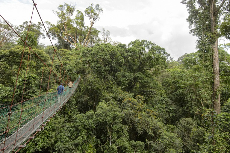 Danum Valley: Borneo's Untouched Jungle Paradise