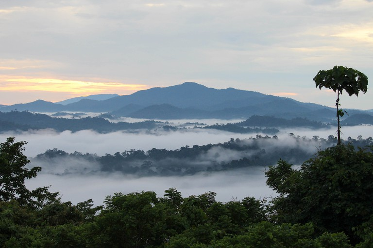 Danum Valley Conservation Area, Sabah Borneo, Malaysia
