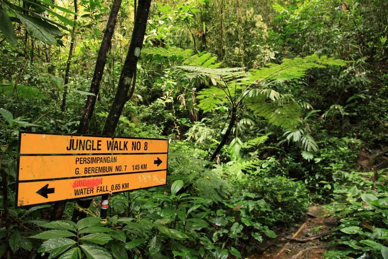 Jungle / Rainforest at Beremban Mountain, Cameron Highlands, Malaysia.
