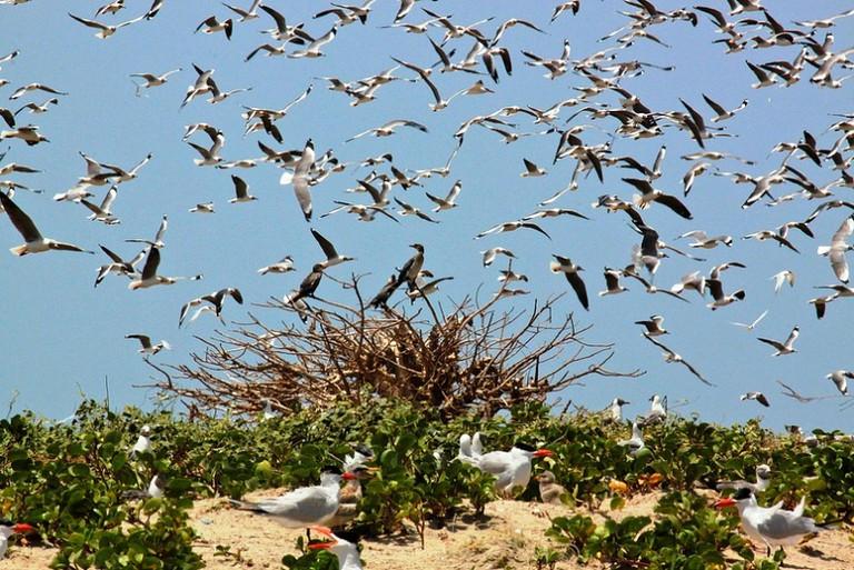 Tanji is becoming an increasing bird santuary in The Gambia