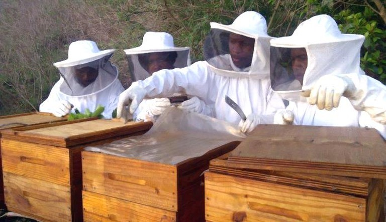 African_Honey_Bee_Inspection
