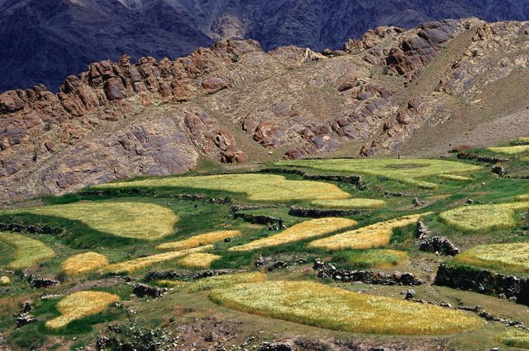 Terraced fields Leh Ladakh Jammu and Kashmir India