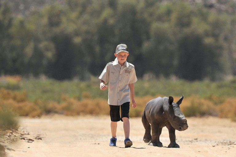 Taking a walk with a baby rhino