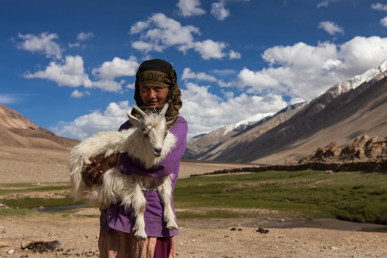 A girl with a pashmina goat in the Chang Thang region of Ladakh, India