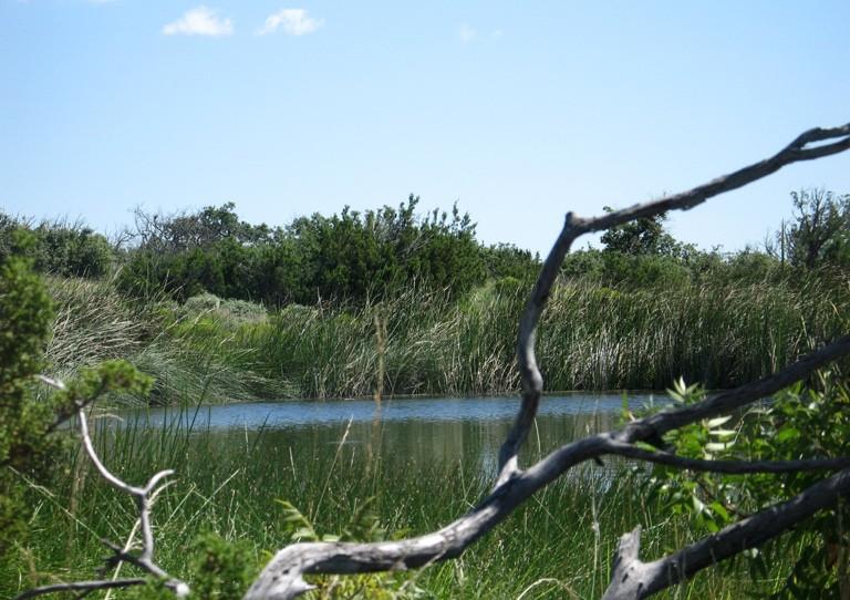 Guadalupe Mountians manzanita spring NPS