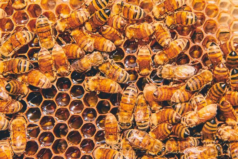 Andrew's Honey sells only raw, unpasteurized honey