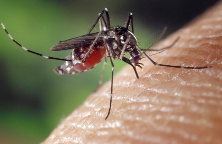 mosquito-1332382_1920