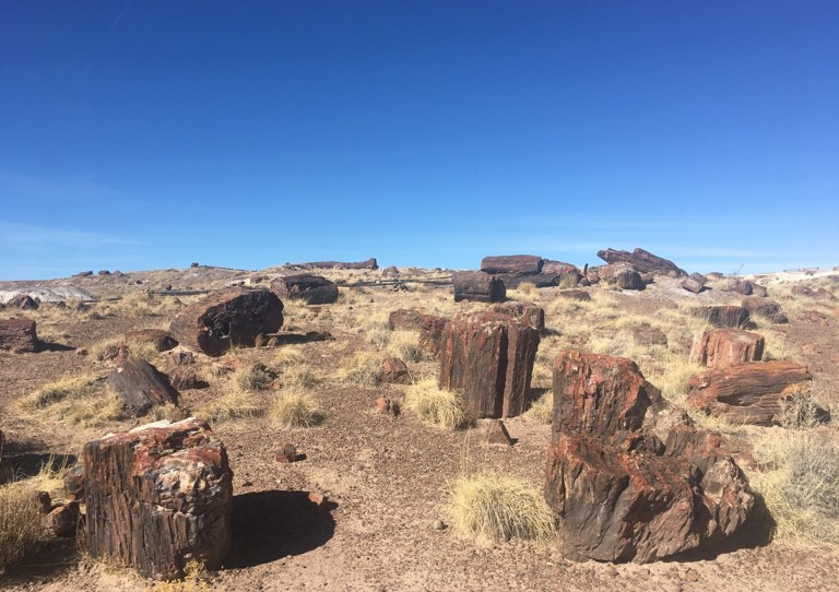 PetrifiedForest 7