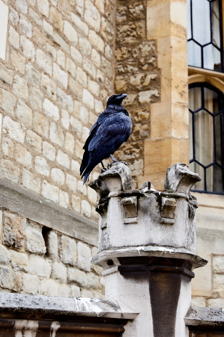 Tower of London Raven perched on a carved stone railing.