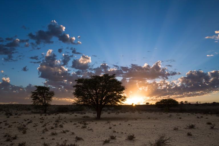 Kalahari desert of the Kgalagadi Transfrontier Park, South Africa