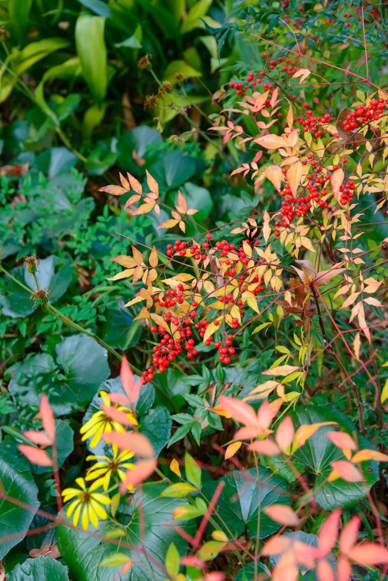 Mukojima-Hyakkaen Garden in autumn in Tokyo
