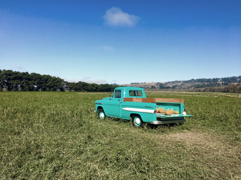 Old truck at the pumkin patch, Ferndale