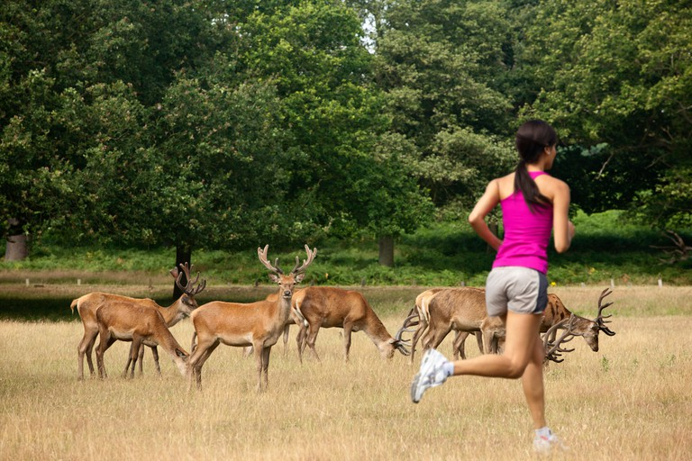 A woman runs past a herd of deer in Richmond Park, London.