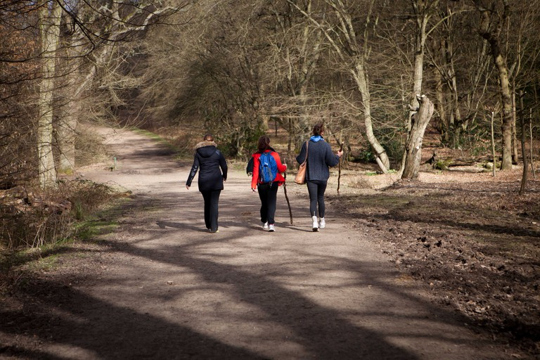 3 female walkers in a sunlit Epping Forest