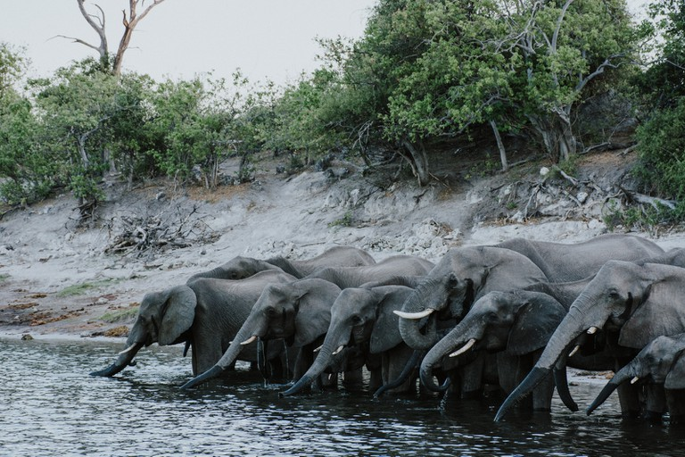Some call Chobe the 'Land of Giants'