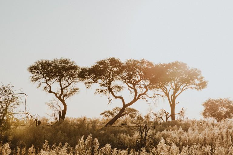 The Okavango Delta is a low-impact tourism destination