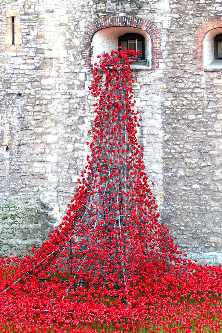 Ceramic commemorative poppies Tower of London
