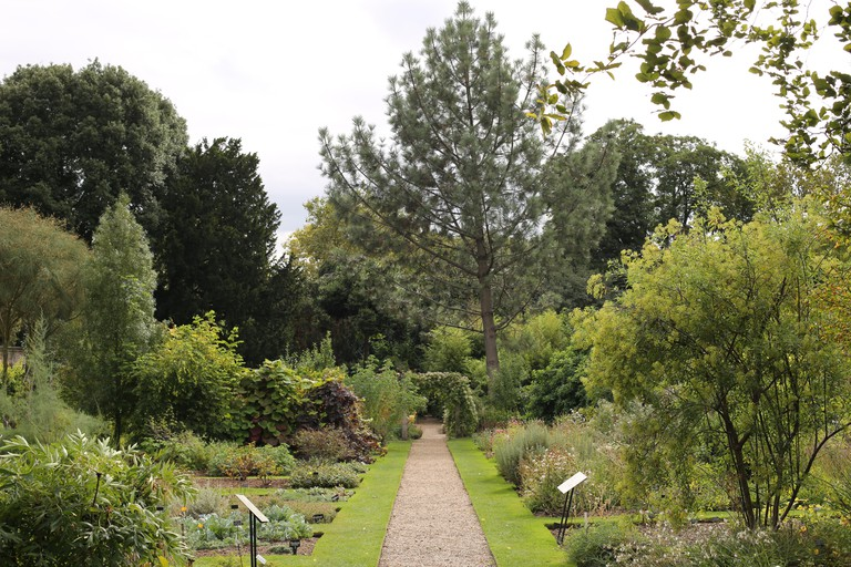 Chelsea Physic Garden is home to thousands of plant species