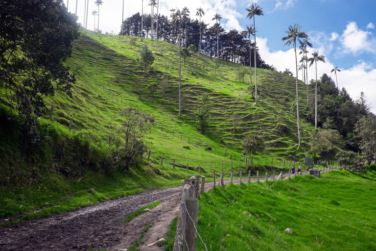The Cocora Valley (Salento, Quindio), Colombia