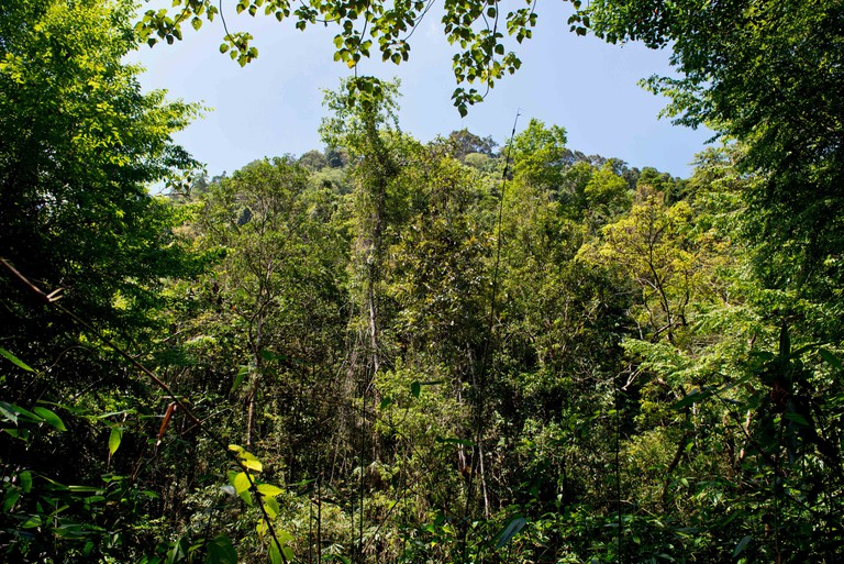 Sinharaja Forest Reserve, Ratnapura, Sri Lanka.