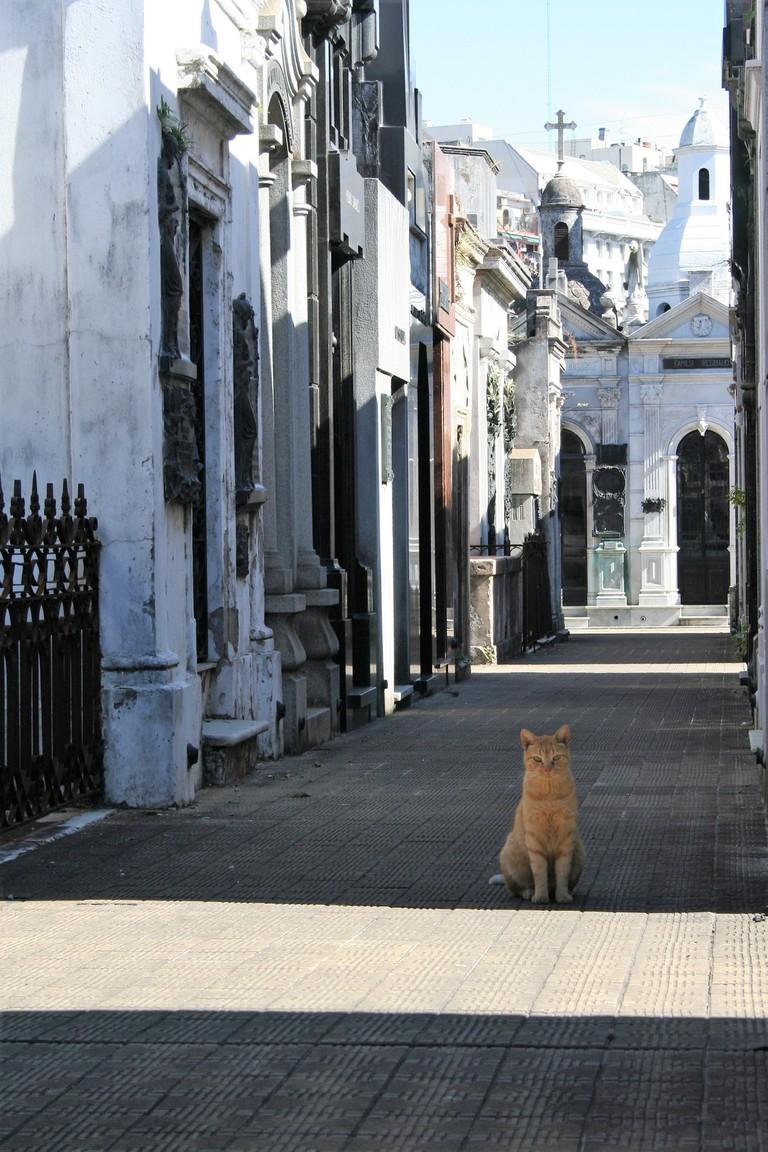 Cat in La Recoleta cemetery, Buenos Aires