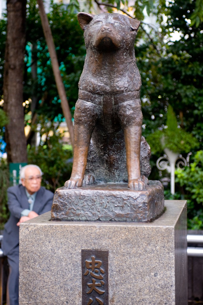 Statue of Hachiko the Akita dog at Shibuya Station, Tokyo, Japan.