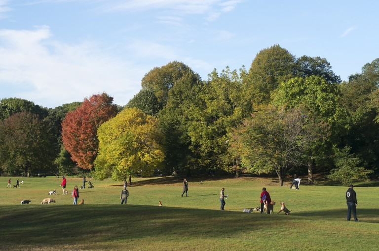 People walking dogs in Prospect Park, Brooklyn, NYC, USA.