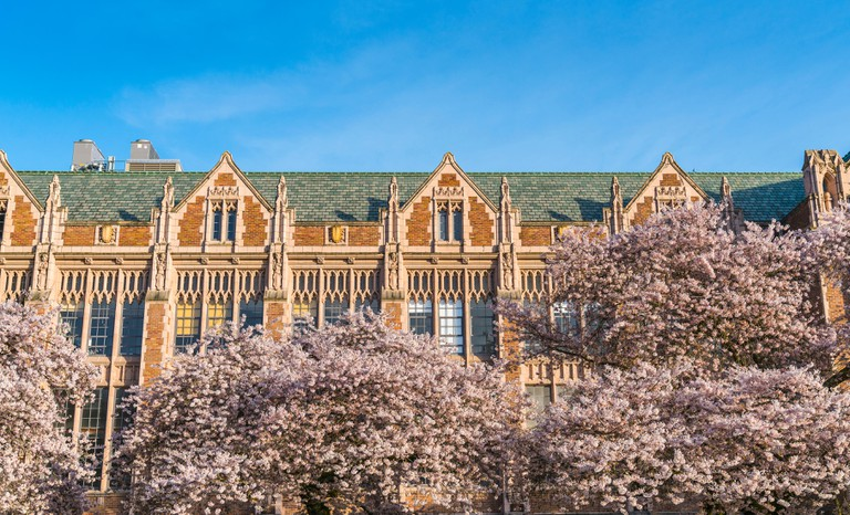 Cherry blossom blooming in front of the University of Washington, Seattle