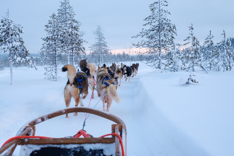 Riding husky sledge in Lapland, Finland.