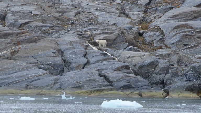 Polar bears abound in the area