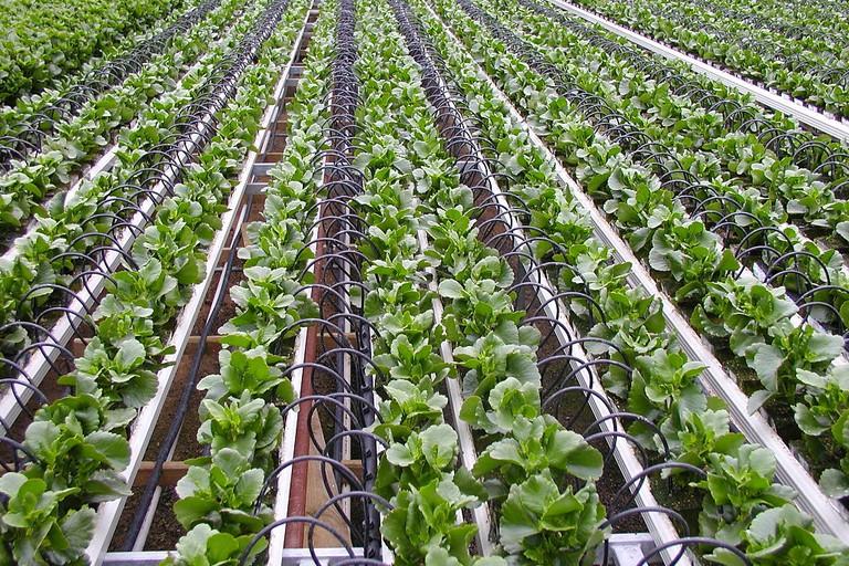 A Netafim irrigation system