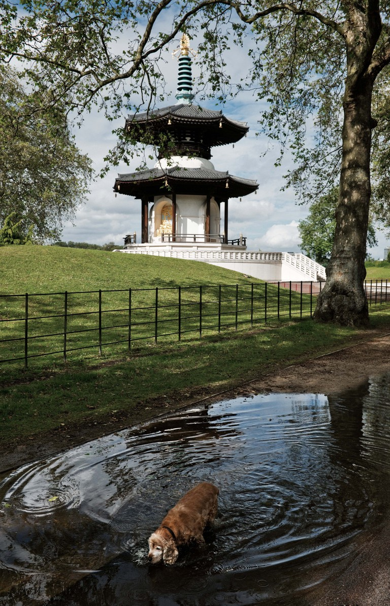 Battersea Park Peace Pagoda with spaniel drinking water from large puddle