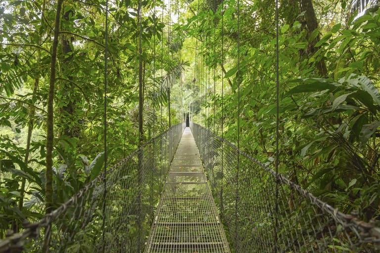 A bridge leads through the canopy of a rainforest in Costa Rica