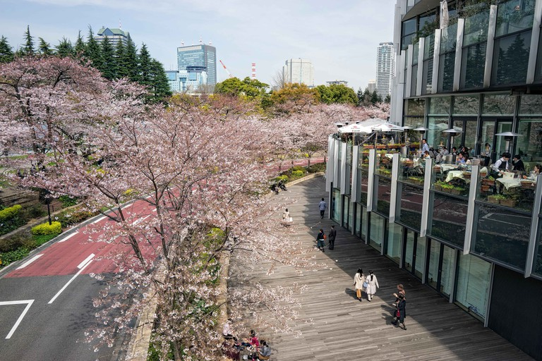 Japan, Honshu island, Kanto, Tokyo, the Midtown Roppongi district in spring.