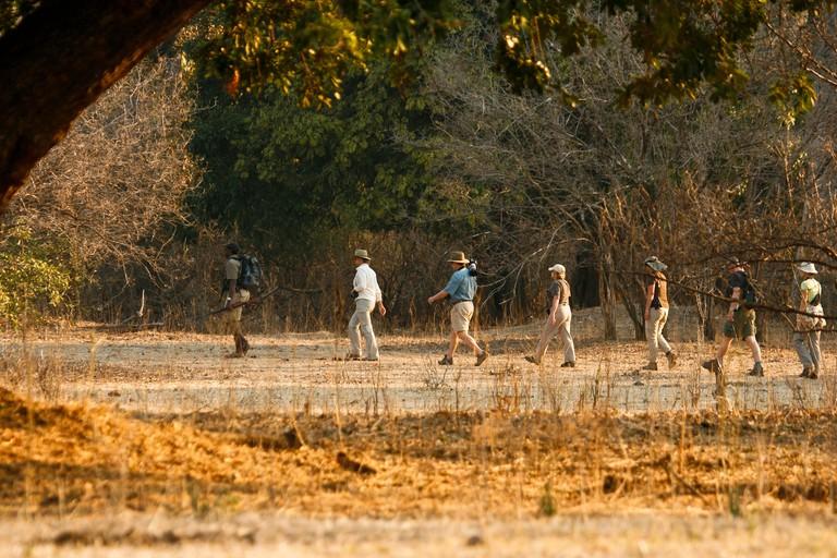 Tourists on Walking Safari. Mana Pools National Park. Zimbabwe.