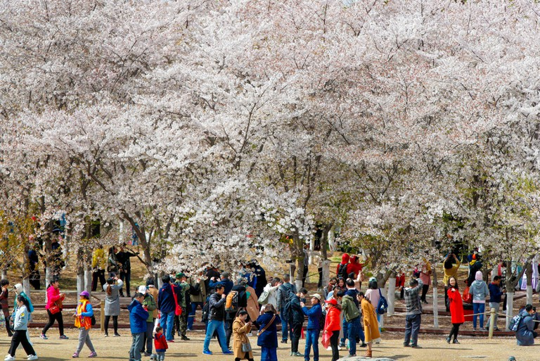 Visitors enjoy cherry blossoms at the Yuyuantan Park during a spring festival in Beijing.