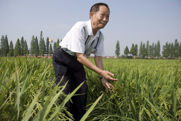 Scientist Yuan Longping shows some experimental growths of super hybrid rice at fields belonging to the National Hybrid Rice Research Centre in Changsha in Central China's Hunan Province.
