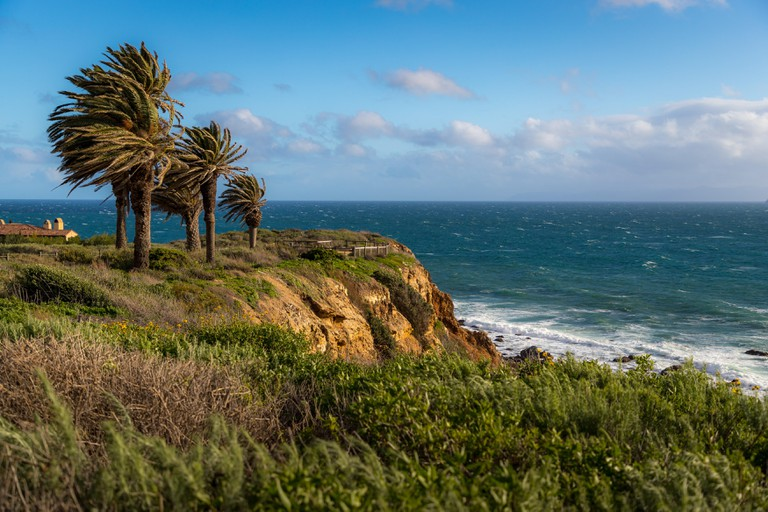 Colorful coastal view of palm trees atop tall cliffs with strong winds blowing their leaves, seen from Terranea Trail, Rancho Palos Verdes, California